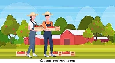 concept, rijp, volle, landbouwkundig, landscape, landbouwers, werkmannen , kratten, eco, vasthouden, landbouw, rood, oogst, plat, vrouw, platteland, paar, man, bouwland, lengte, appeltjes , vruchten