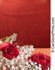 concept, -, roses, 2, passion, fond, fleurs blanches, rouges