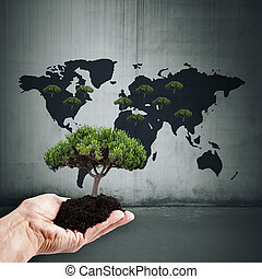 concept to restore forests