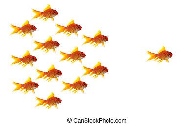 concept, zakelijk, diffrent, achtergrond, goudvis, witte ,...