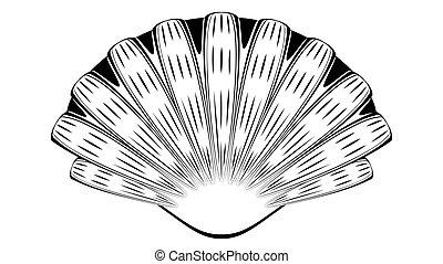 conception décorative, seashell