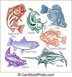 conception, ensemble, t-shirt, américain, -, isolé, vecteur, fish, white., créatif, écusson, logo.