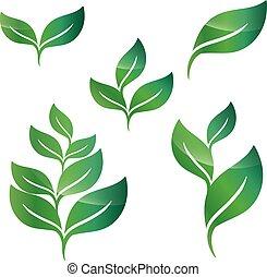 conception, feuilles, ensemble, vert, éléments