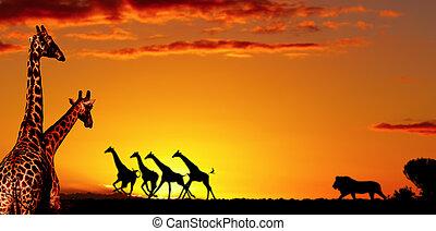 concepto, africano, naturaleza
