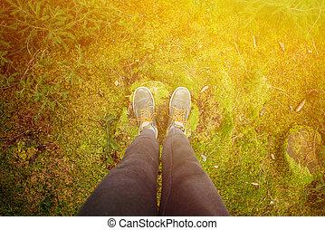 concepto, bosque, caminata