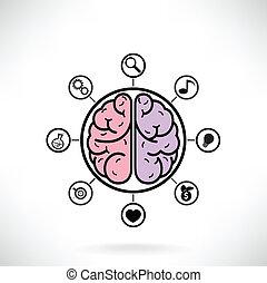 concepto, de, cerebro, función, para, educación y ciencia