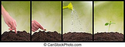 concepto, de, sembrar, y, planta, crecer, en, colección