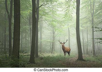 concepto, venado, fairytale, exuberante, ciervo, crecimiento, bosque verde, brumoso, imagen, paisaje, rojo