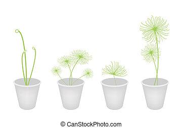 Concepts, Decoration, Symbol, Plants in A Flower Pot -...