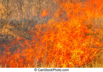 Conceptual climate change. Fire background. Close-up of bush in flames. Dangerous fires in dry season. Strength of fiery conceptual element.