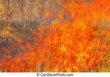 Conceptual climate change. Fire background. Close-up of bush...