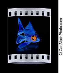 Conceptual image: goldfish with the earth instead of eyes. The film strip