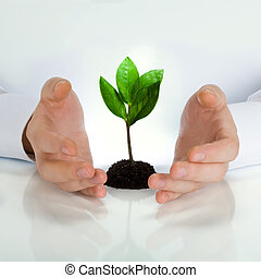 Image of green plant between business man�s hands placed on a white table