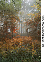 Conceptual landscape image of Summer changing to Autumn in the forest