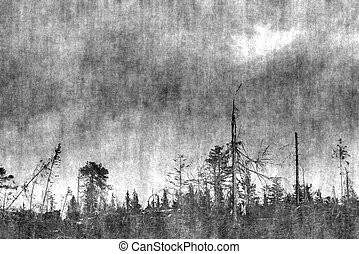 Conceptual noisy image of forest clearing and sky in Sweden.