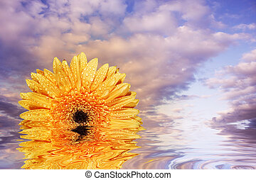 Conceptual sunrise with gerbera daisy instead of sun