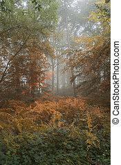 conceptueel, landscape, beeld, van, zomer, het veranderen, om te, herfst, in, de, bos