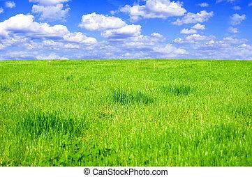 conceptuel, champ, herbeux, image.