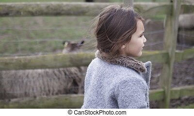 Concerned little girl getting ready to hand-feed sheep behind fence on a farmyard. Concerned-looking young girl on a farm with sheep behind fences. Kids interacting with rural animals