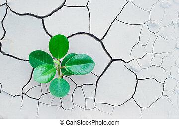 concetto, albero, ambiente, terra, crescente, fesso, risparmiare, mondo