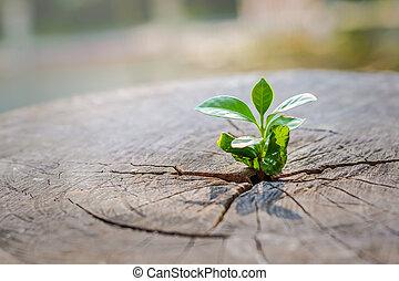 concetto, costruzione, vita, taglio, stumps., centro, piantina, sostegno, albero, fuoco, futuro, tronco, crescente, nuovo, forte
