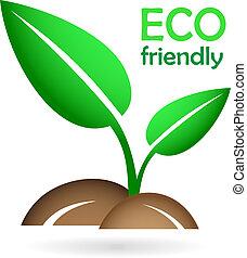 concetto,  eco, germoglio,  -, giovane, verde