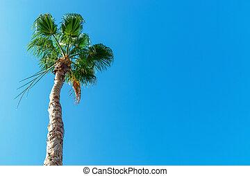 concetto, illuminato, sole, chiaro, albero, giovane, contro, palma, alto, cielo