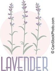 concetto, lavender., immagine, vettore, provenza, style.