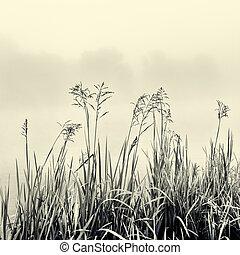 concetto, silhouette, -, canna, nero, nebbia, minimalismo, bianco