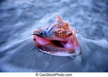 conch shell being washed up on shore
