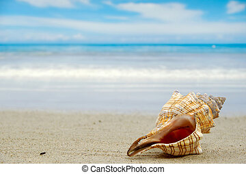 A conch shell on an exotic beach