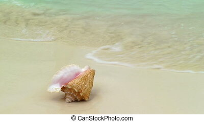 Conch Shell on Cancun Beach - Conch shell on tropical beach,...