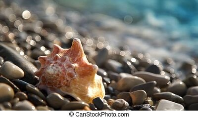 Conch shell on pebble beach
