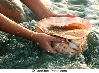 Conch shell - The big conch shell on a background of water ...