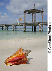 (conch), vie, plage