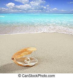 concha, caraíbas, tropicais, pérola, areia, praia branca