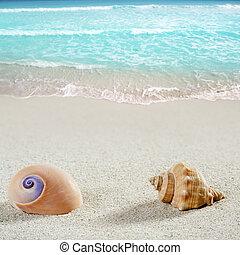 concha, caracol, tropicais, areia, closeup, mar, praia branca