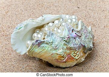 concha, pérolas, dentro, multi-cor, luminoso, mar