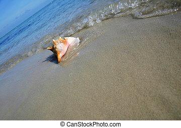 concha, playa