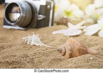 conchas de mar, en, arenoso, playa., verano