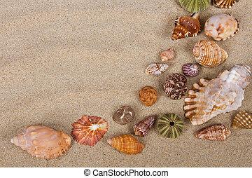 conchas de mar, en, estudio