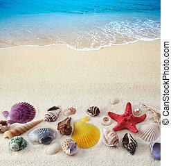 conchas de mar, en, playa de arena