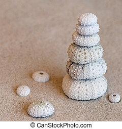 conchas de mar, pilluelo