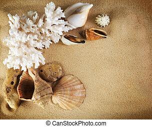 conchas, marco, mar