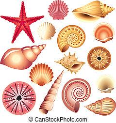 conchas marinas, blanco, aislado