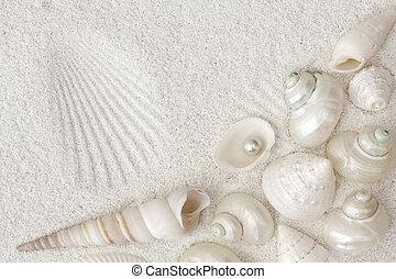 conchas marinas, blanco