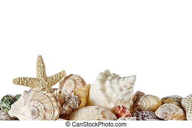 conchas marinas, colección