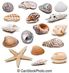 conchas marinas, collection.