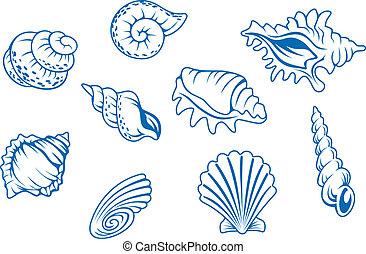 conchas marinas, conjunto, océano