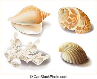 conchas marinas, coral, conjunto